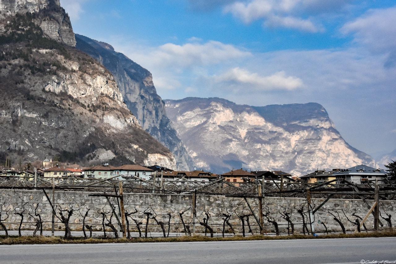 La via del Teroldego a Mezzocorona, Trentino