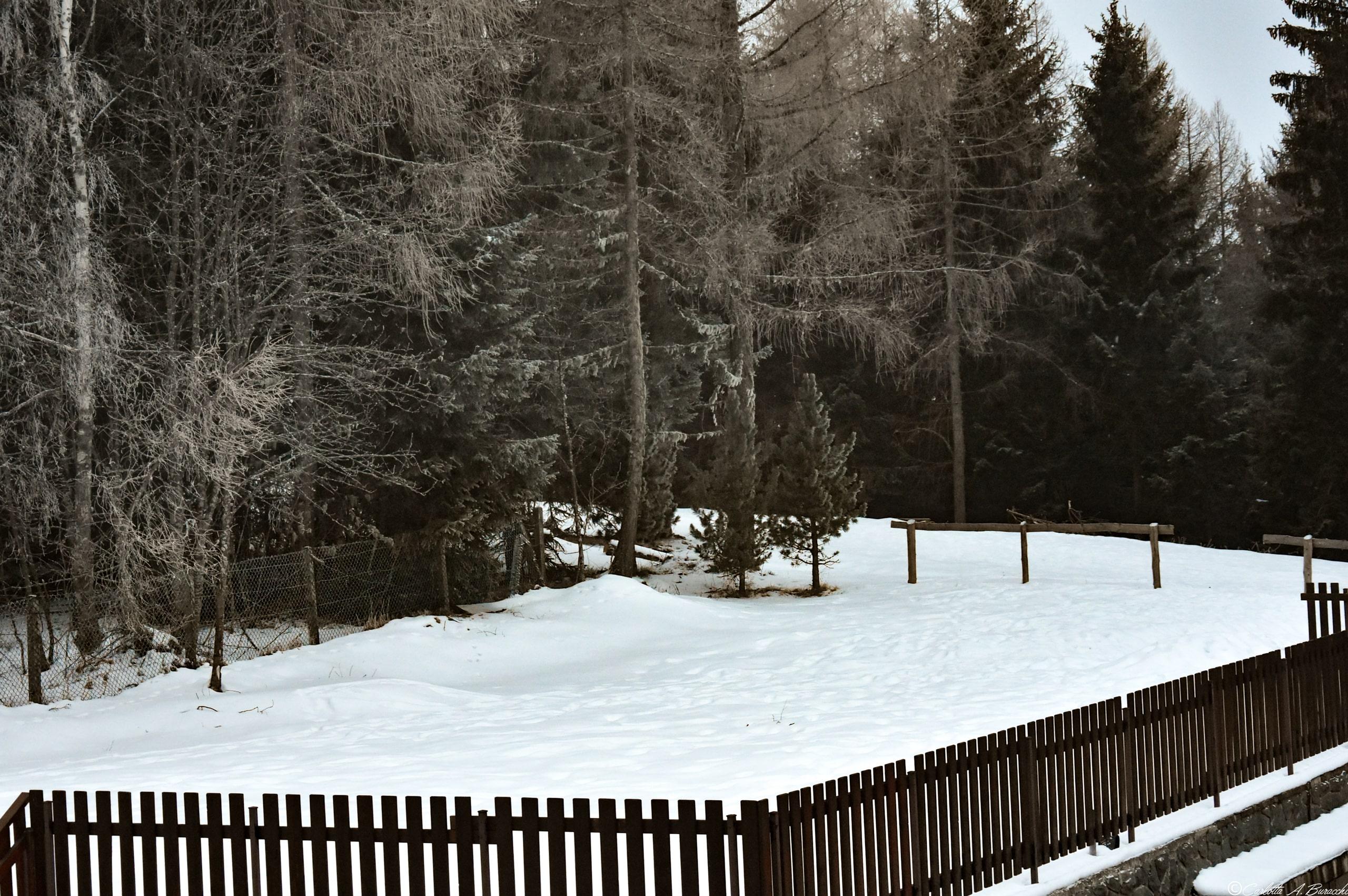 Un panorama innevato fuori la mia finestra, nel cuore della Valle dei Mòcheni