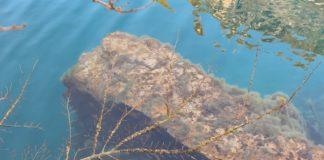 Antichi basamenti affiorano dalle cristalline acque del Nera nei pressi di Stifone