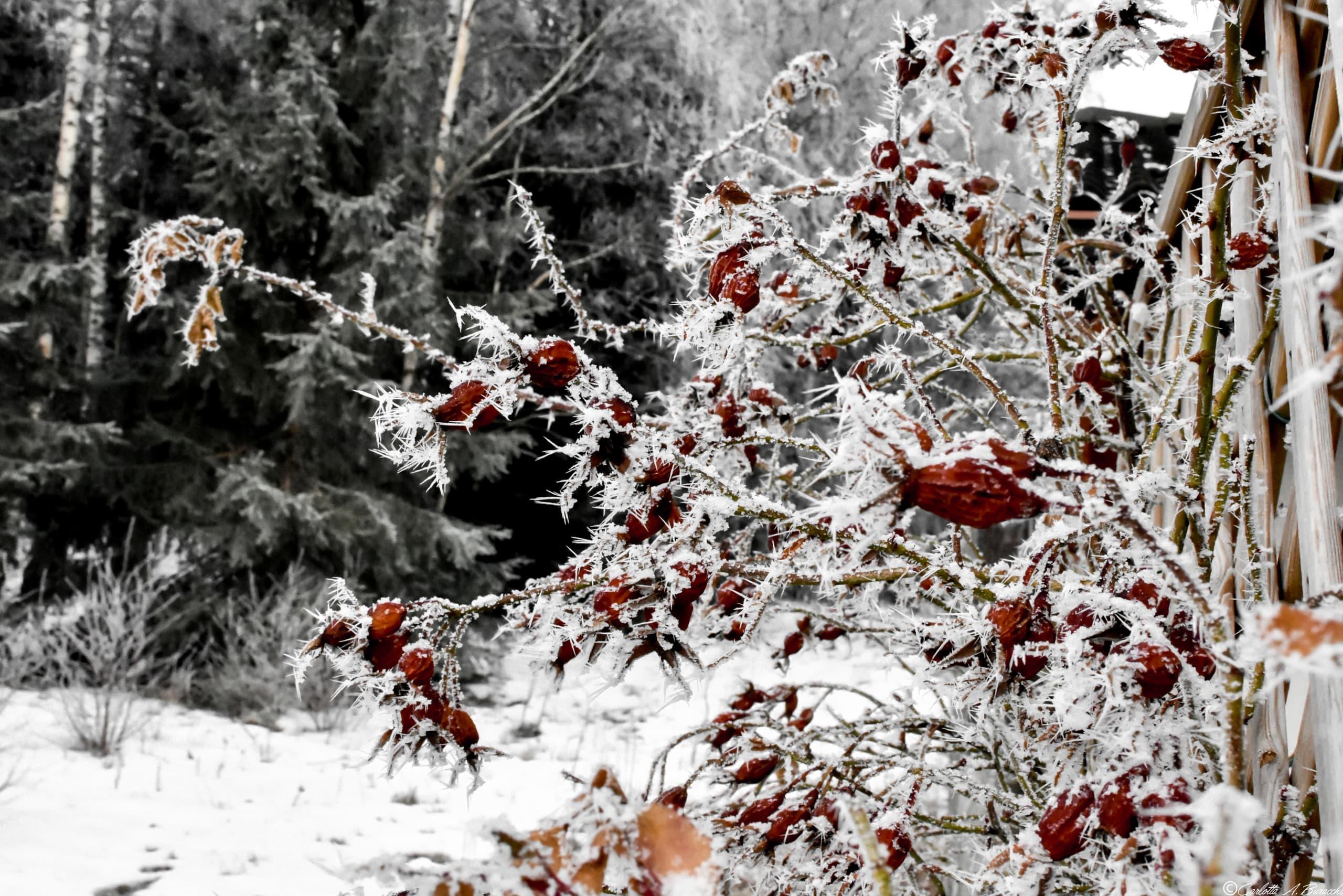La natura attorno al Ristorante Albergo Aquila Nera, nella Valle dei Mòcheni